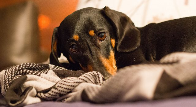 Don't Poison Your Pet! Look Out for These Common Household Items